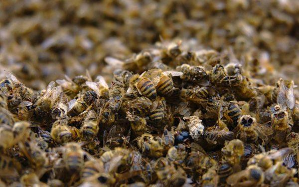 Artensterben – Wir alle sind bedroht